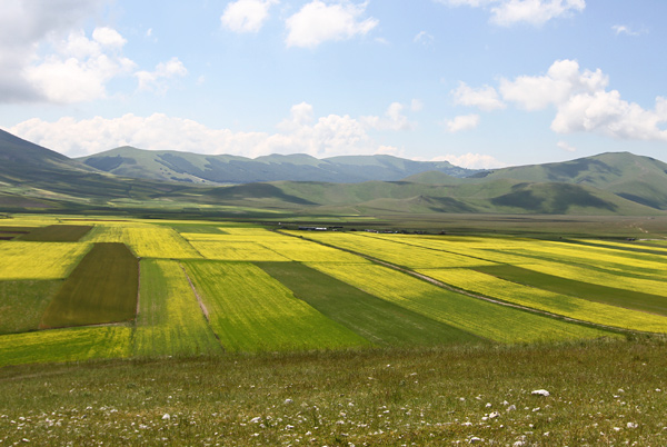 field13